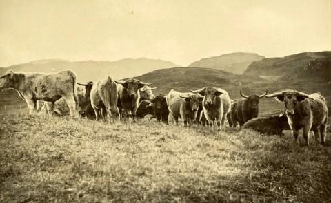 1880 in Scotland