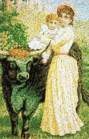 Pet Bull    Photo adjusted029