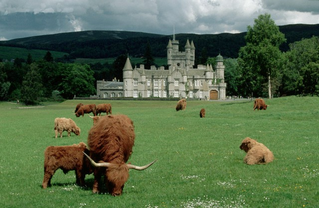 Highland Cattle at Balmoral Corbis Images