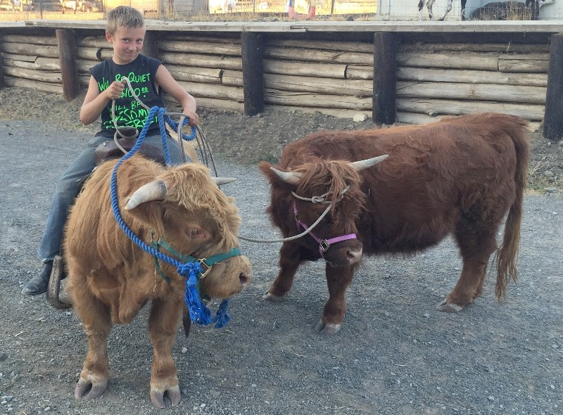 Jack on 2 yr old bull Charlie Boy and leading 2 yr old heifer Gucci  cropped - Copy